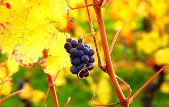 Qué fruta de temporada hay en octubre y cómo aprovecharla - Sweetter