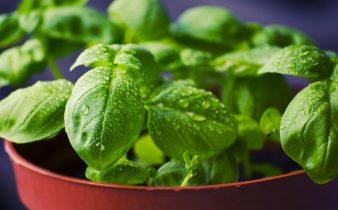 Comer diariamente un bowl de vegetales de hojas verdes es la mejor manera de potenciar tus músculos - Sweetter