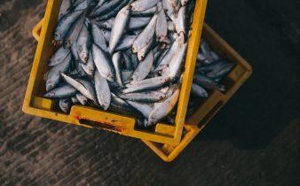 Beneficios de comer marisco - Sweetter